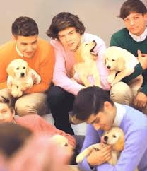 1D WITH animals<3