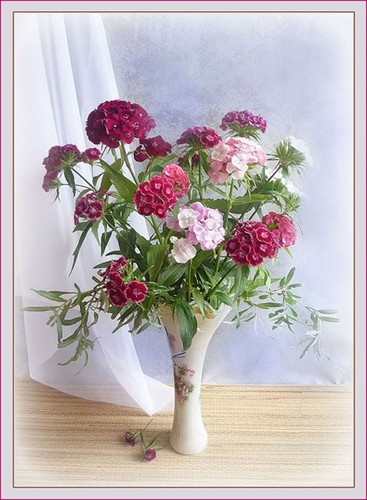 Beautiful Flowers ♡