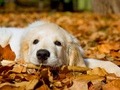 Cute Dog :) - dogs wallpaper