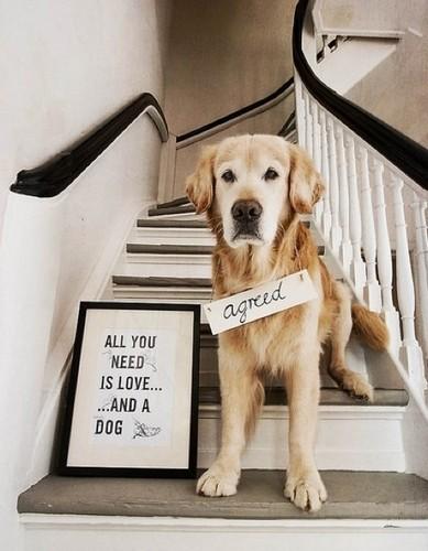 Cute Dog :)
