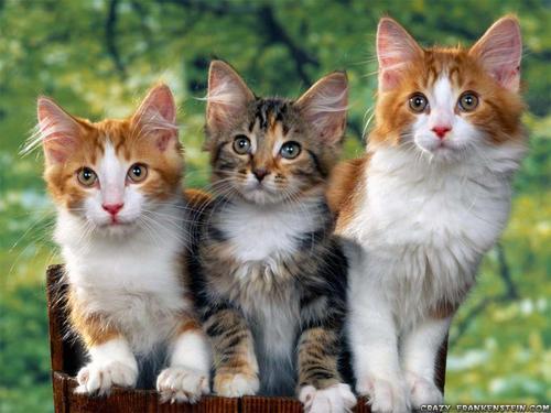 Cute बिल्ली