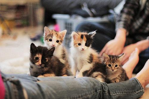 Cute gatos
