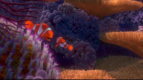 Alla ricerca di Nemo
