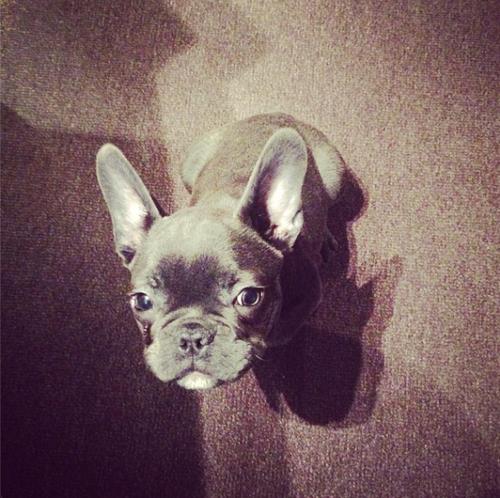 Jessie/her puppy, Jackson