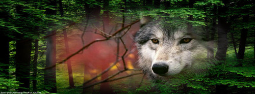Lobo দেওয়ালপত্র