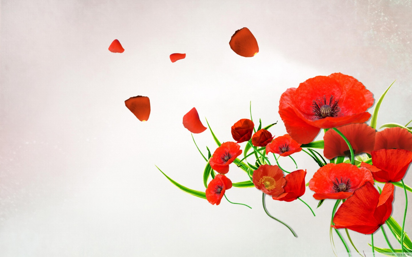 Flowers Images Poppy Hd Wallpaper And Background Photos 33551633