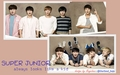 Super Junior - super-junior wallpaper