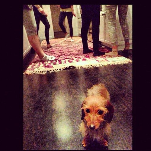 The TRUE 爱情 of LEIGHTON: HER LITTLE DOG TRUDY <3