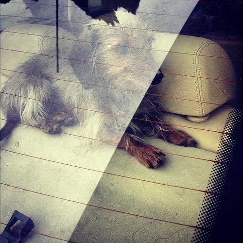 The TRUE l'amour of LEIGHTON: HER LITTLE DOG TRUDY <3