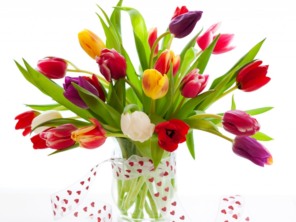 Tulips - flowers Wallpaper  Flowers