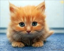 cute kitten :)