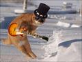 funny chitarra