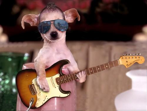 funny gitar