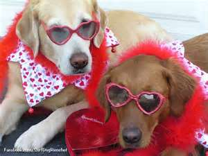 Dogs Images Cute Valentine Wallpaper And Background Photos 33628034