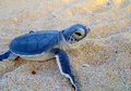 Baby Turtle  - animals photo