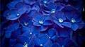 Blue Цветы