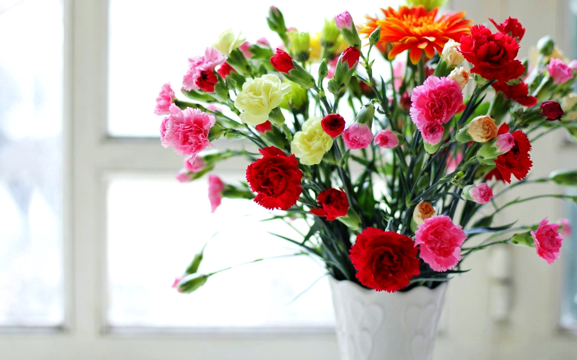Flowers images Carnations HD wallpaper and background
