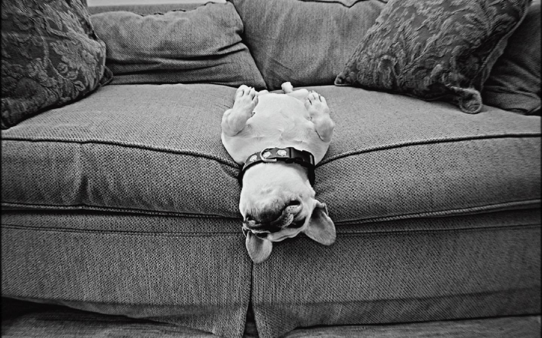 Cute Dog Dogs Wallpaper 33698319 Fanpop