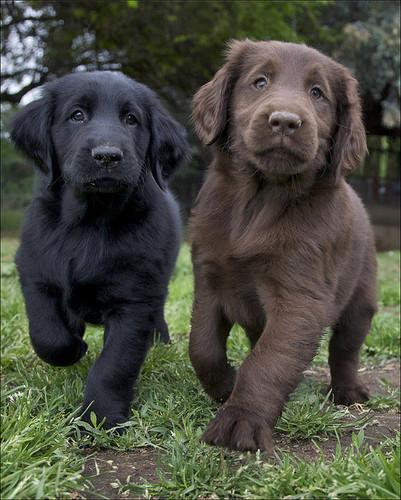Cute perros