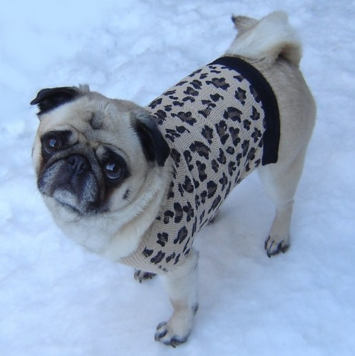 Cute Pug Leopard Sweater