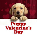 Cute Puppy Valentine - dogs photo