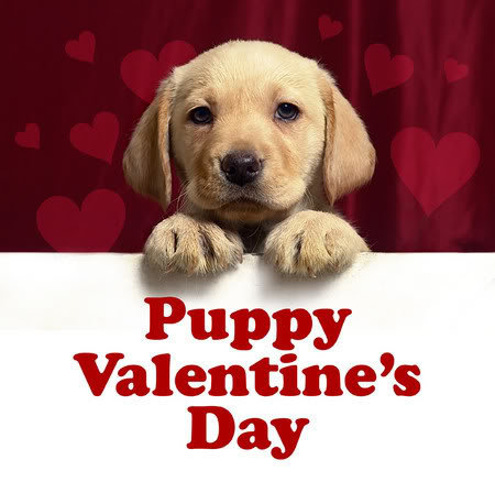 Dogs Images Cute Puppy Valentine Wallpaper And Background Photos