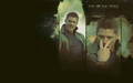 Eye Of The Tiger  - supernatural wallpaper