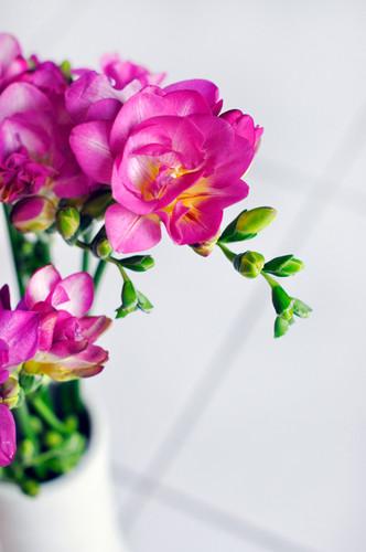 fleurs fond d'écran with a bouquet, a begonia, and a camellia titled fleur