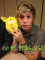 For Sneha - niall-horan fan art