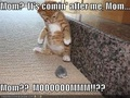 Funny lolcats  - lol-cats photo