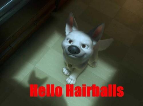 Hello Hairballs...