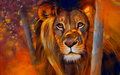 Lion  - animals wallpaper