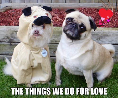 Pug प्यार
