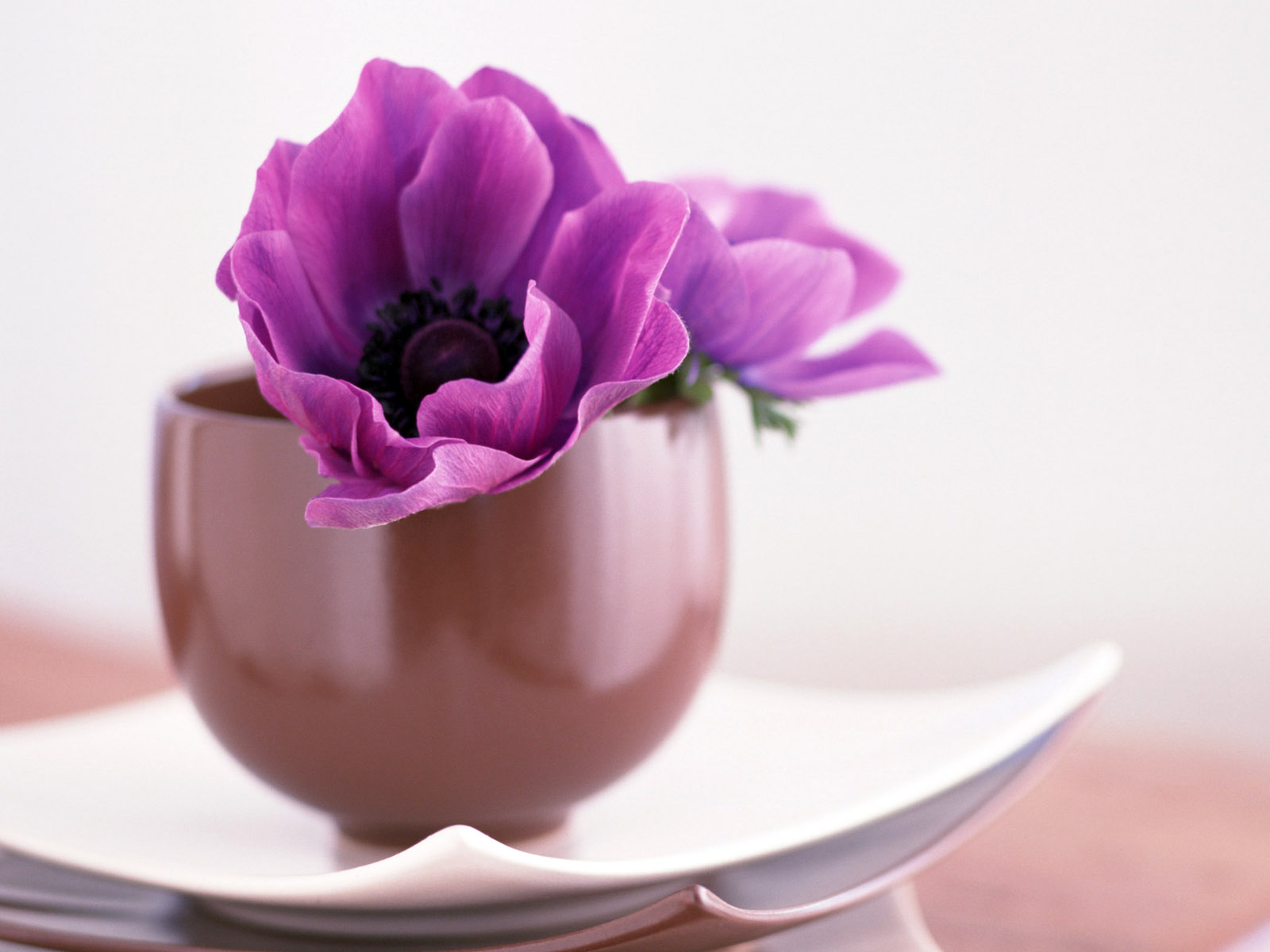 Flowers Images Purple Flowers Hd Wallpaper And Background Photos