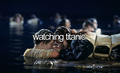 Titanic - titanic photo