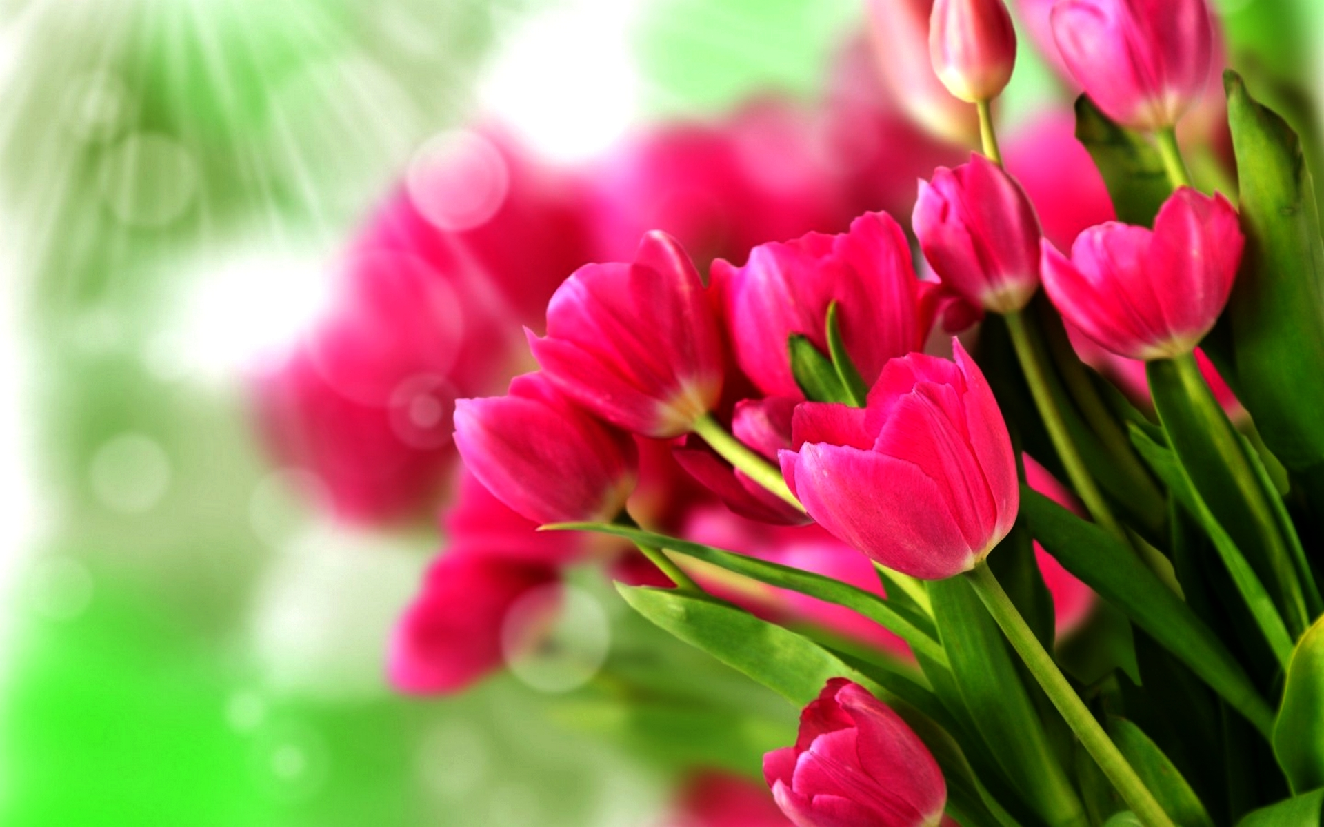 Flowers Images Tulips HD Wallpaper And Background Photos