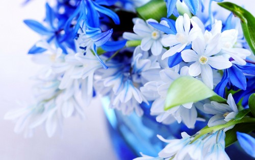 Flowers wallpaper containing a camellia, a bouquet, and a begonia entitled White & Blue Flowers