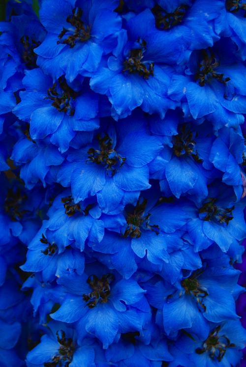 Beautiful Flowers Flowers Photo 33623980 Fanpop