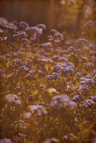beautiful 꽃