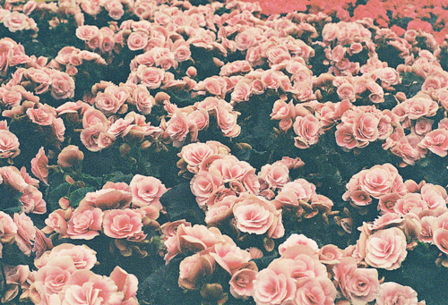 Flowers Wallpaper Tumblr