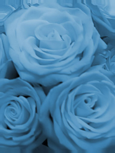 Flowers images blue flower wallpaper and background photos - What are blue roses called ...