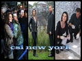 csi new york - csi-ny wallpaper
