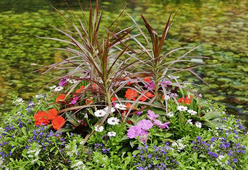bunga picture contest