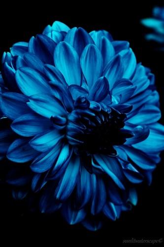 Blumen picture contest