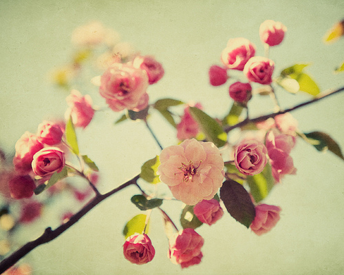 fiori wallpaper containing a camellia, a begonia, and a rose titled flowers-tumblr