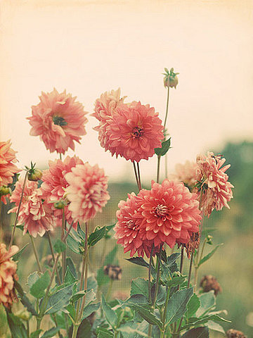Flores Imagenes Flowers Tumblr Fondo De Pantalla And Background