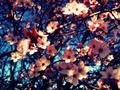flowers-tumblr