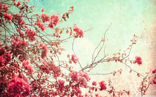 Flowers wallpaper with a japanese plum, a japanese apricot, and a red maple titled flowers-tumblr