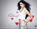 letchis - katrina-kaif wallpaper