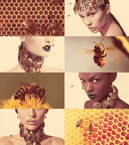 nymphs of the honey bees